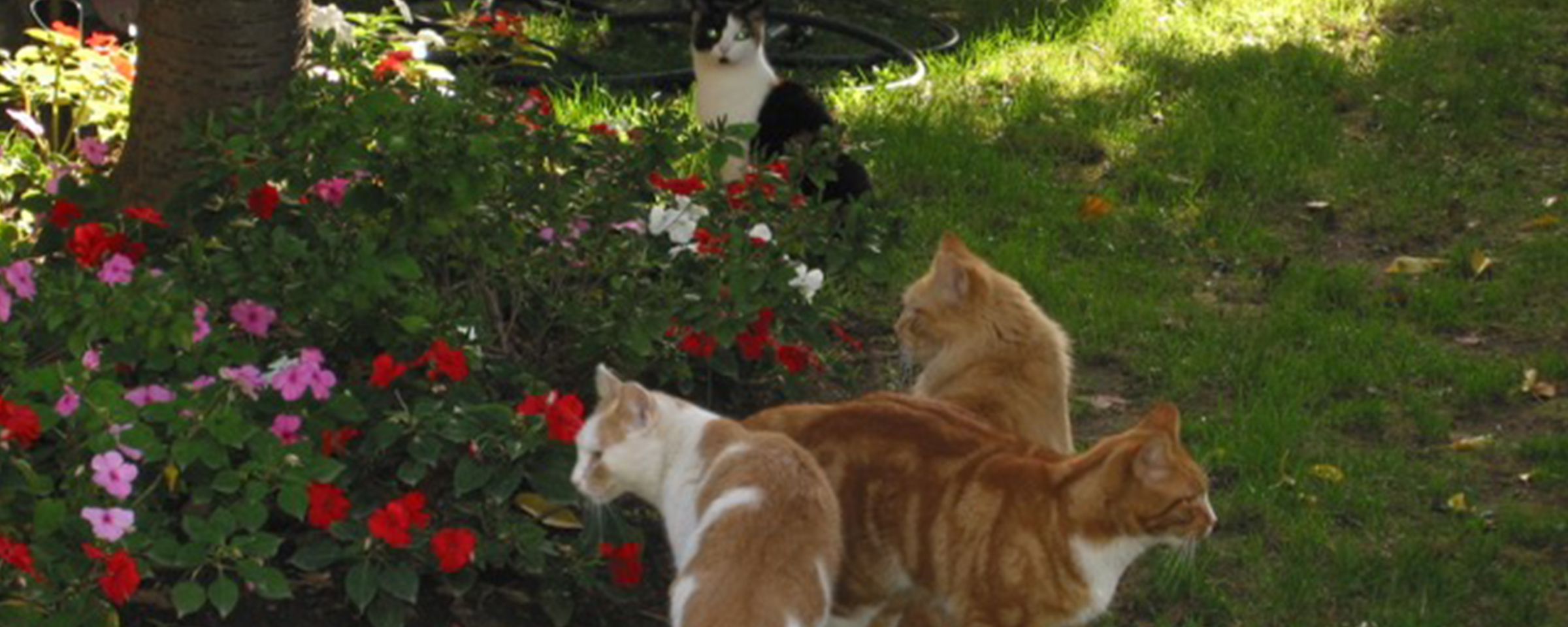 Outdoor Cats in Our Community - CPAW NJ