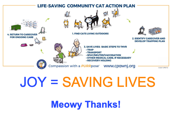 NJ cat rescue