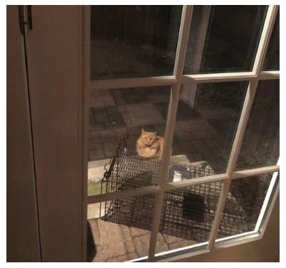 nj cat rescue